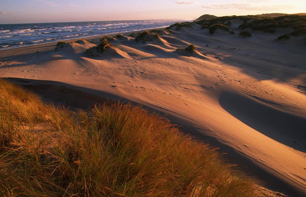 View of dunes at Forvie NNR in evening light